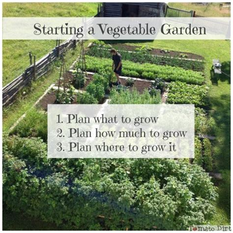 starting a vegetable garden what you need to do