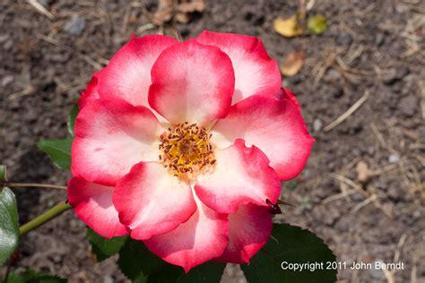 bett rosa maplewood garden pictures