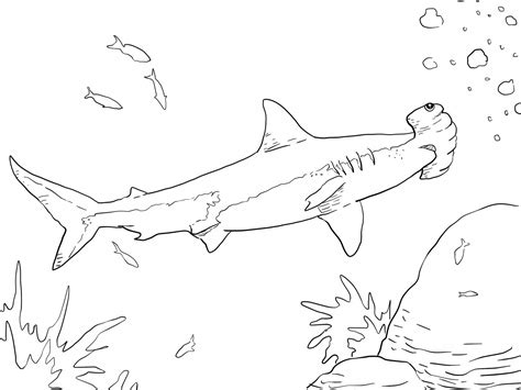 coloring page of a hammerhead shark shark color pages for preschoolers loving printable