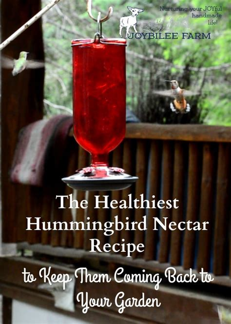 the healthiest hummingbird nectar recipe so they ll come