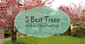 5 best trees to grow in your front yard pro com blog