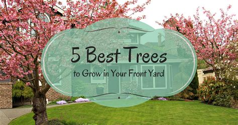 best trees to plant in your front yard erodriguezdesign com