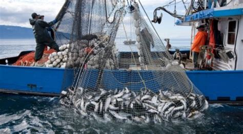 commercial fishing boat jobs nations fight the last great sea battle using fishing