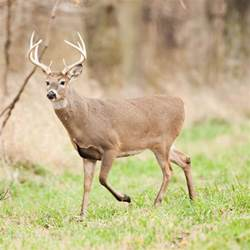 Plant Pests And Diseases Identification - deer hunting mdc hunting and fishing
