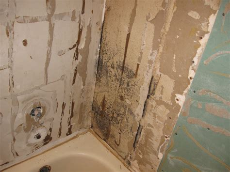 bathtub mold how to get rid of mold in bathroom walls getting rid of