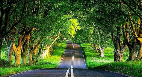 trees background desktop backgrounds trees the road 4237218 1284x698