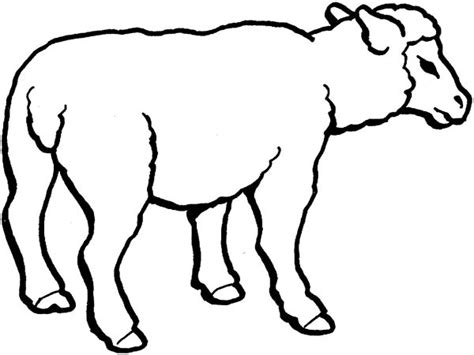 sheep face coloring coloring pages