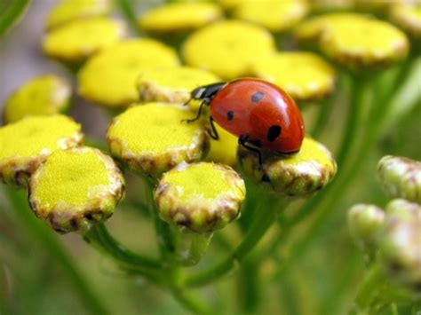 lady bugs fun animals wiki  pictures stories