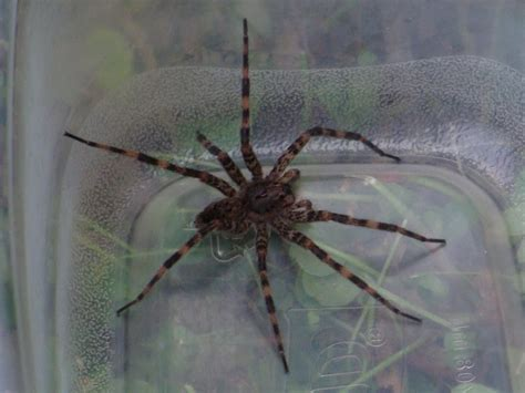 huge spider on side of house giant spider on side of house www pixshark com images galleries with a bite