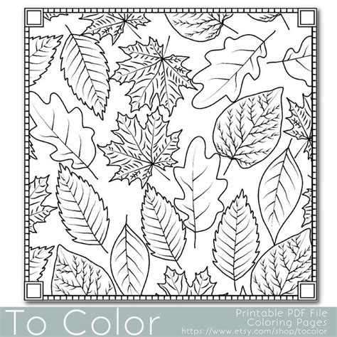 leaves coloring pages for adults 113 best outlines fall thanksgiving images on pinterest