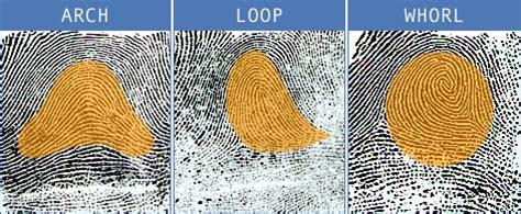 pattern types in fingerprint identification fingerprints association of forensic science providers