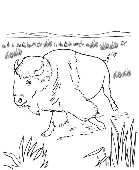 north american animals coloring page buffalo coloring pages coloring home