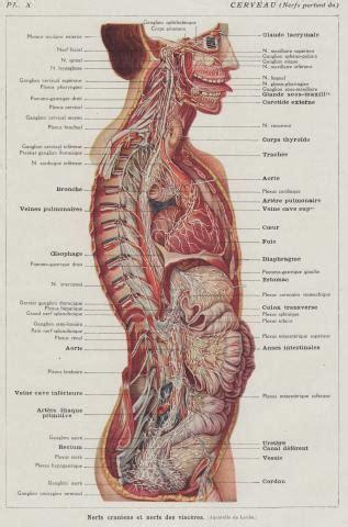 anatomy diagram anatomy tongue whereapy