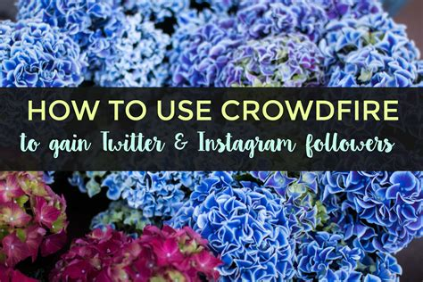 crowdfire tutorial instagram how to use crowdfire to gain twitter instagram followers