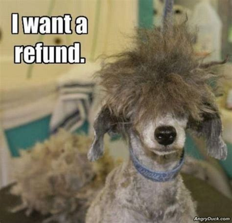 dog haircuts gone really wrong 30 funny animal captions 30 pics amazing creatures