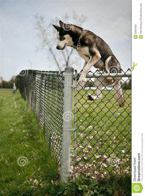 jumping fence jumping an outdoor park fence stock photo image 33520360