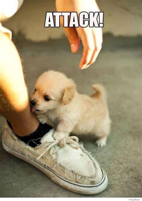 Cutest Memes - cute puppy meme tumblr image memes at relatably com