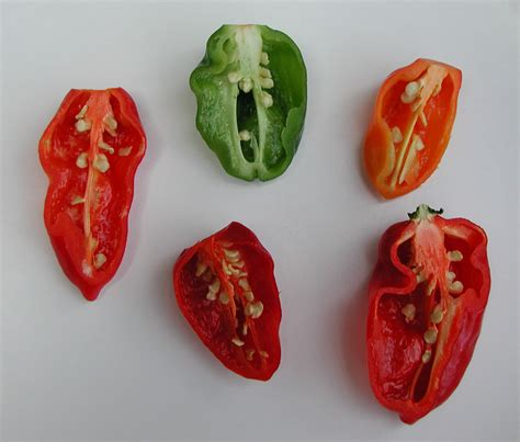 chili dictionary pepper definition of pepper by the free dictionary mill definition of mill by the