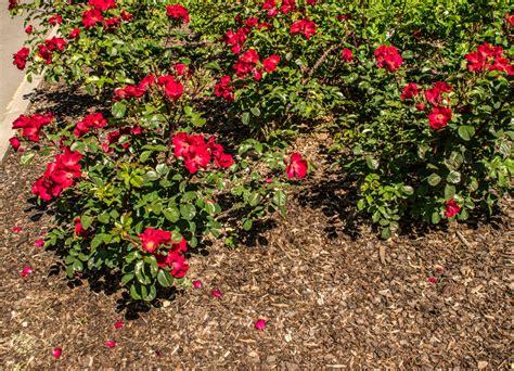 Rindenmulch Im Garten Nachteile