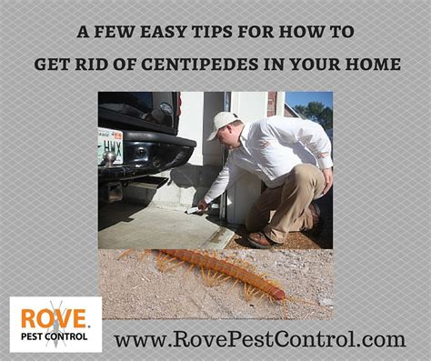 How To Get Rid Of House Centipedes by A Few Easy Tips For How To Get Rid Of Centipedes In Your