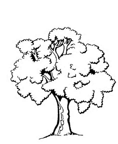coloring pages ginkgo tree printable coloring pages trees az coloring pages