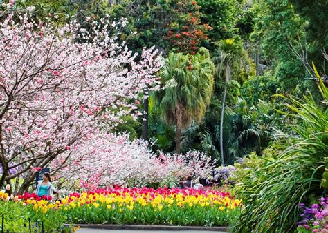 Sydney Botanical Garden Guided Walks At The Royal Botanic Garden Sydney Living Museums