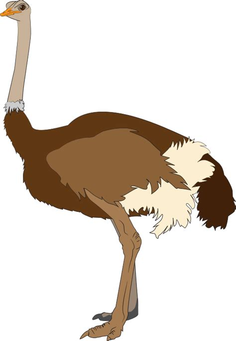 ostrich clipart free to use domain ostrich clip