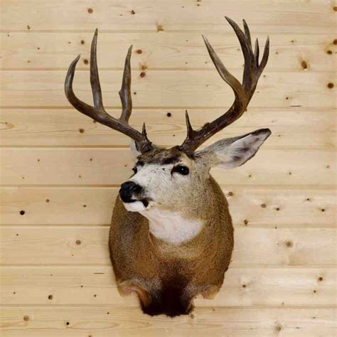 34 best taxidermy living room images on