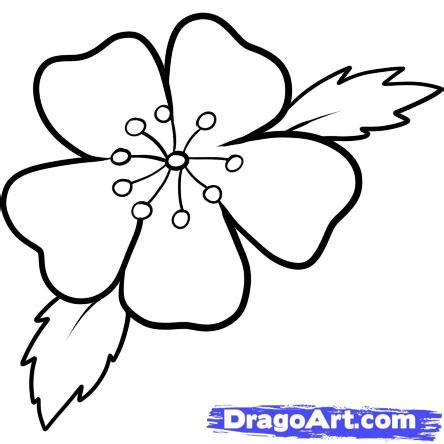 flower drawing templates easy to draw cherry blossoms how to draw a cherry