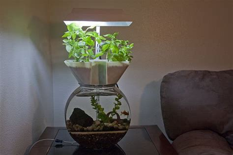 self contained garden the goldfish garden self contained aquaponic aquarium