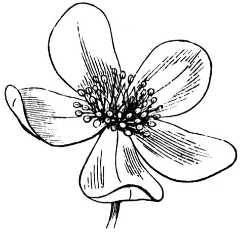 printable drawings of flowers flower line drawing cliparts co