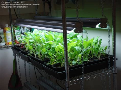 Indoor Vegetable Gardening Ideas Indoor Winter Vegetable Garden Indoor Vegetable Gardening Vegetable Garden