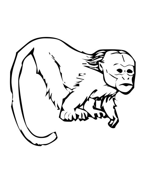 marmoset monkey coloring page file name tamarin coloring page jpg resolution