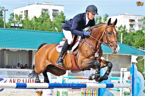 breeds of sport horses pets4homes