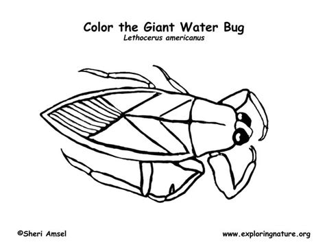 Water Bug Coloring Page | waterbug coloring page