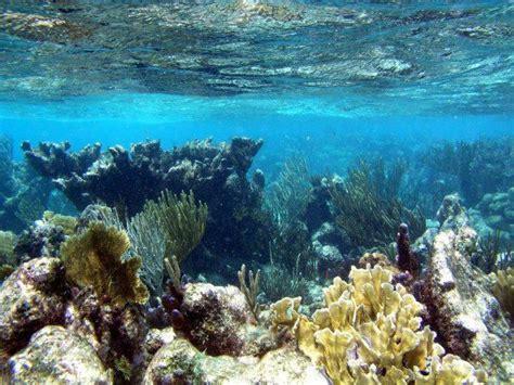 cayman island catamaran tours stingray city catamaran sail and snorkel