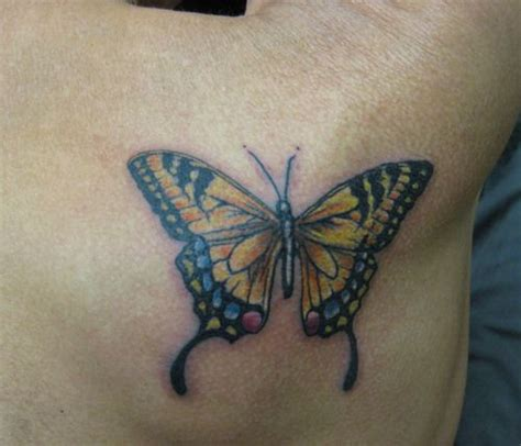 24 best yellow butterfly meaning images on 25 best ideas about yellow butterfly on