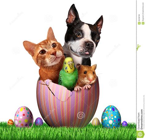 easter breaks with dogs easter pets stock illustration illustration of hamster