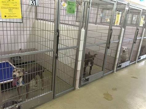 lorain county kennel lorain county kennel investigation after 14 dogs die in back of truck