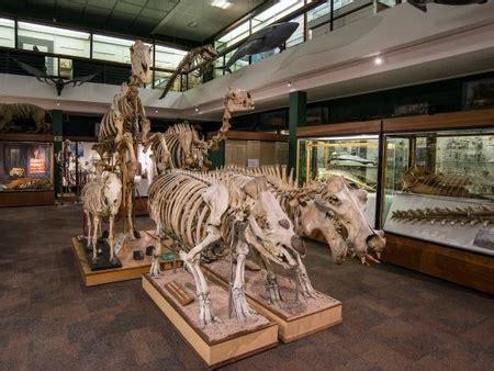 zoology museum university museums  university