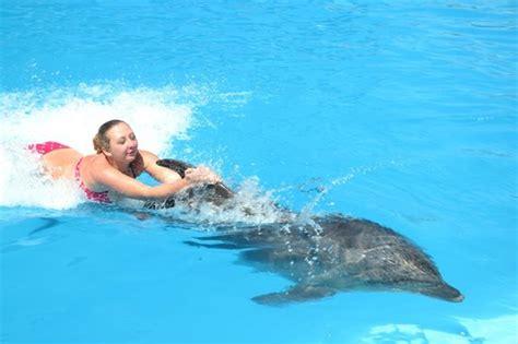 bagno con i delfini escursione nuotare con i delfini a sharm el sheikh