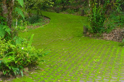 moss backyard moss lawn care growing moss lawns instead of grass