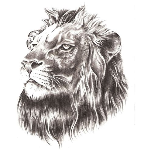 lion face tattoo designs 100 designs you must see