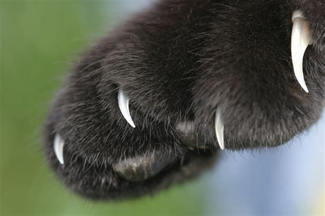 In The Claws Of The Cat hepatitis c and cat scrathes worms germs