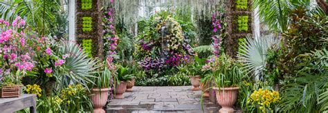 the orchid show nybg
