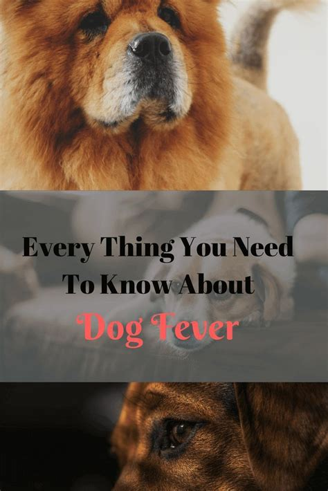 how to tell if puppy has fever best 25 fever temperature ideas on children fever chart baby fever