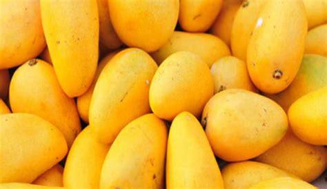 fruit ripening ripening mangoes gets cheaper