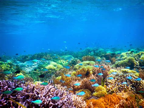 gili kondo the island surga bawah laut di lombok timur