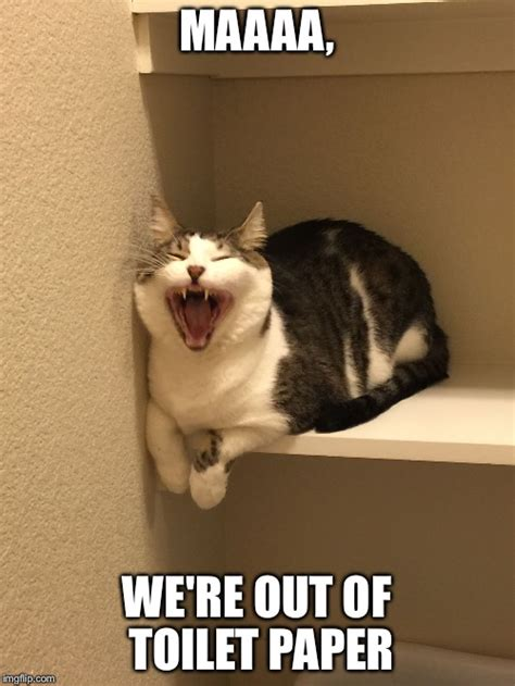 Toilet Paper Meme - image tagged in cat imgflip