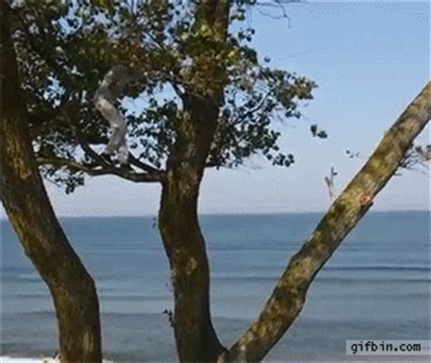 huge rope swing huge rope swing fall best funny gifs updated daily